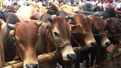 Photo of এবার যেভাবে বেচাকেনা হবে কোরবানির পশুর হাটে